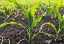 Șansele fermierilor români de a câștiga piețele externe sunt mai slabe
