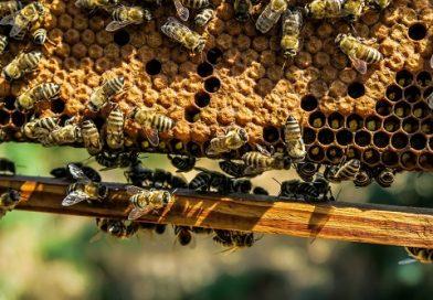 """MENTIUNEA DE CALITATE """"PRODUS MONTAN"""" obținută de încă un apicultor"""
