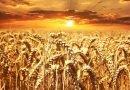 Statul intră pe piața de cereale, semințe, furaje si tutun cu o nouă companie