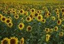 3 noi legi ESENȚIALE din domeniul agricol care, POSIBIL, vor intra în vigoare