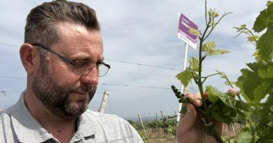 Cum protejăm vița de vie cu cel mai eficient fungicid