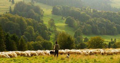 Atenție fermieri! Încep controale APIA la subvenții!